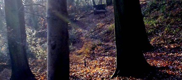 3D Deer between the trees