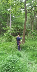 Brown bear in trees B course - Pride Park - Saturday