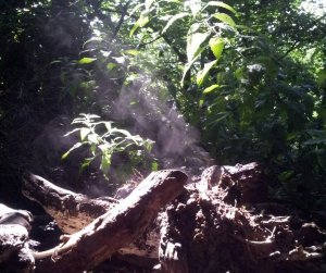 "Image of a wood pile ""steaming"" in the morning sun"