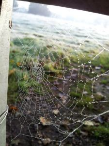 Cob webs on frosty morning