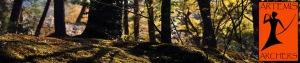 forestfloor-artemis