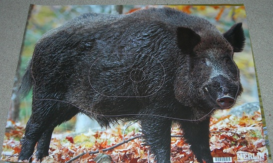 Target face - merlin boar