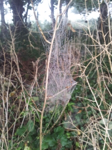 hedgerow spiderwebs