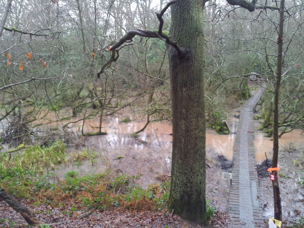 Wet weather and floods (2/2)