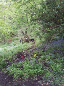 downhill turkey Lyme Valley May 2014