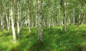 Liberty woodland