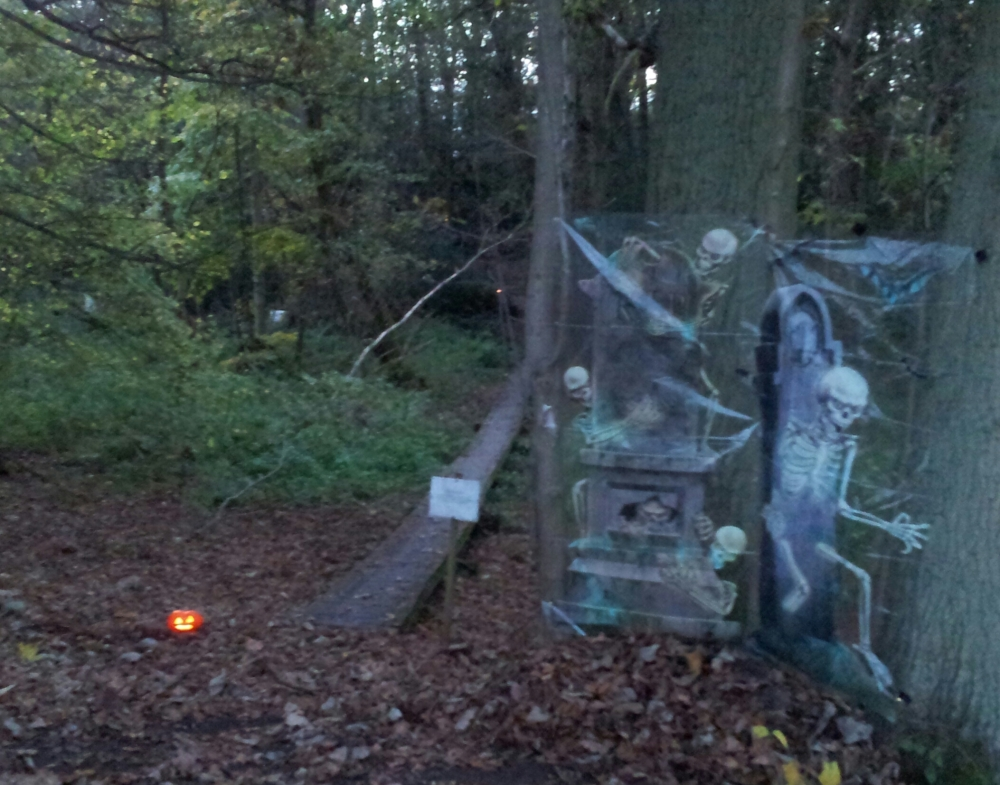 Shoot report - spooky night down at the wood (2/6)