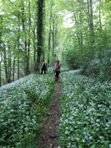 B course - the paths with wild garlic and blue bells