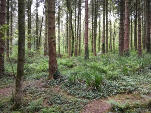 A course - view of the 3D wolf in ferns in the woodland