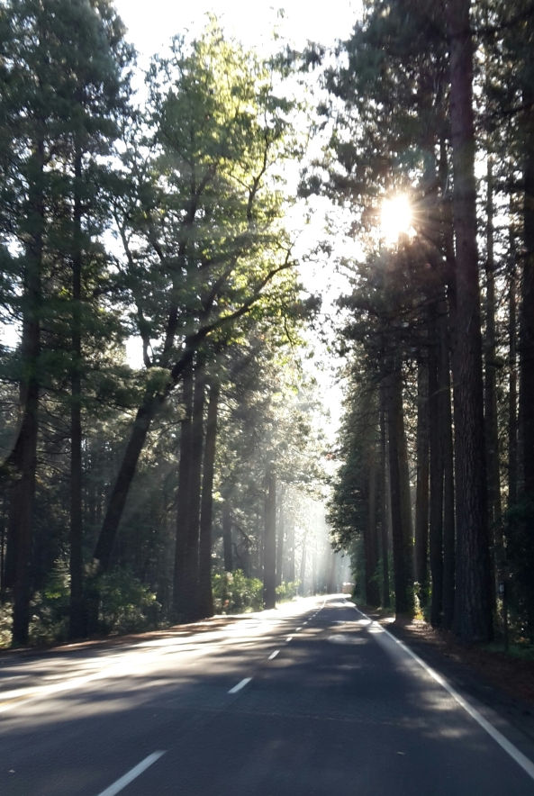 Sun in the trees at Yosemite Park
