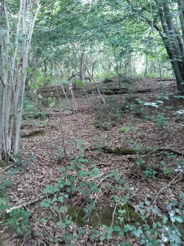 Hawk - uphill 3D deer