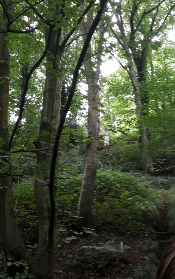 Up hill 3D standing bear