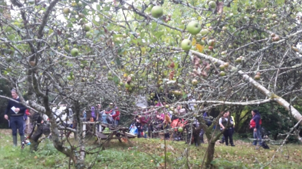 Admin at Bude through the orchard