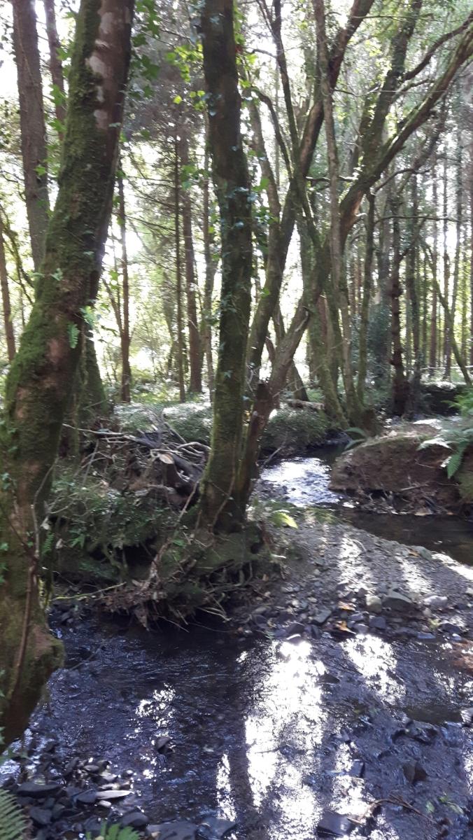 stream running through valley