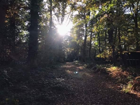 Autumnal sunlight through the trees