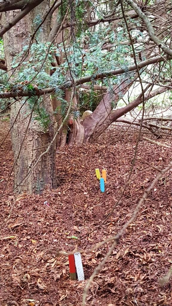 3D bobcat target between the trees
