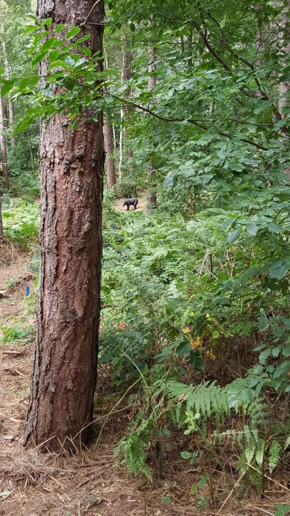 3D black bear between the trees