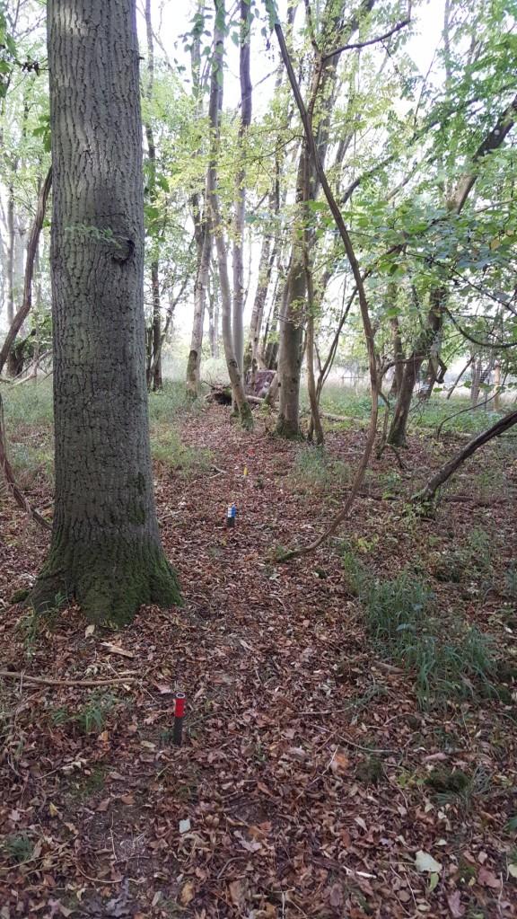 3D fox between the trees