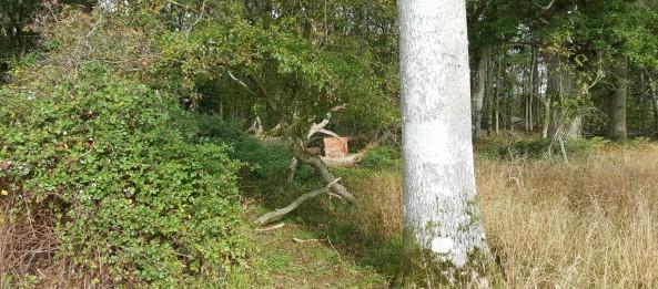 3D coyote target set behind fallen tree