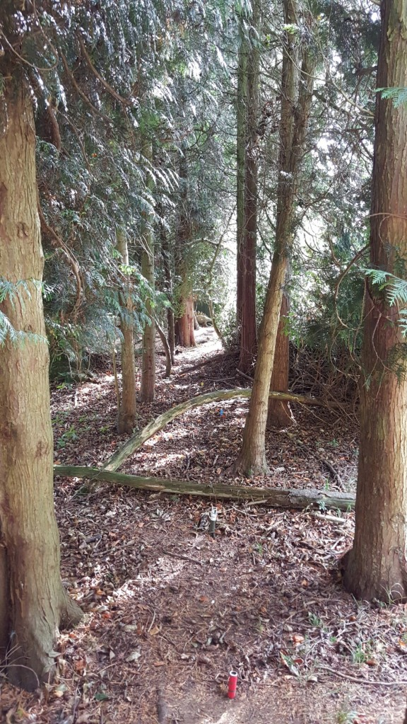3D dinosaur target set between trees