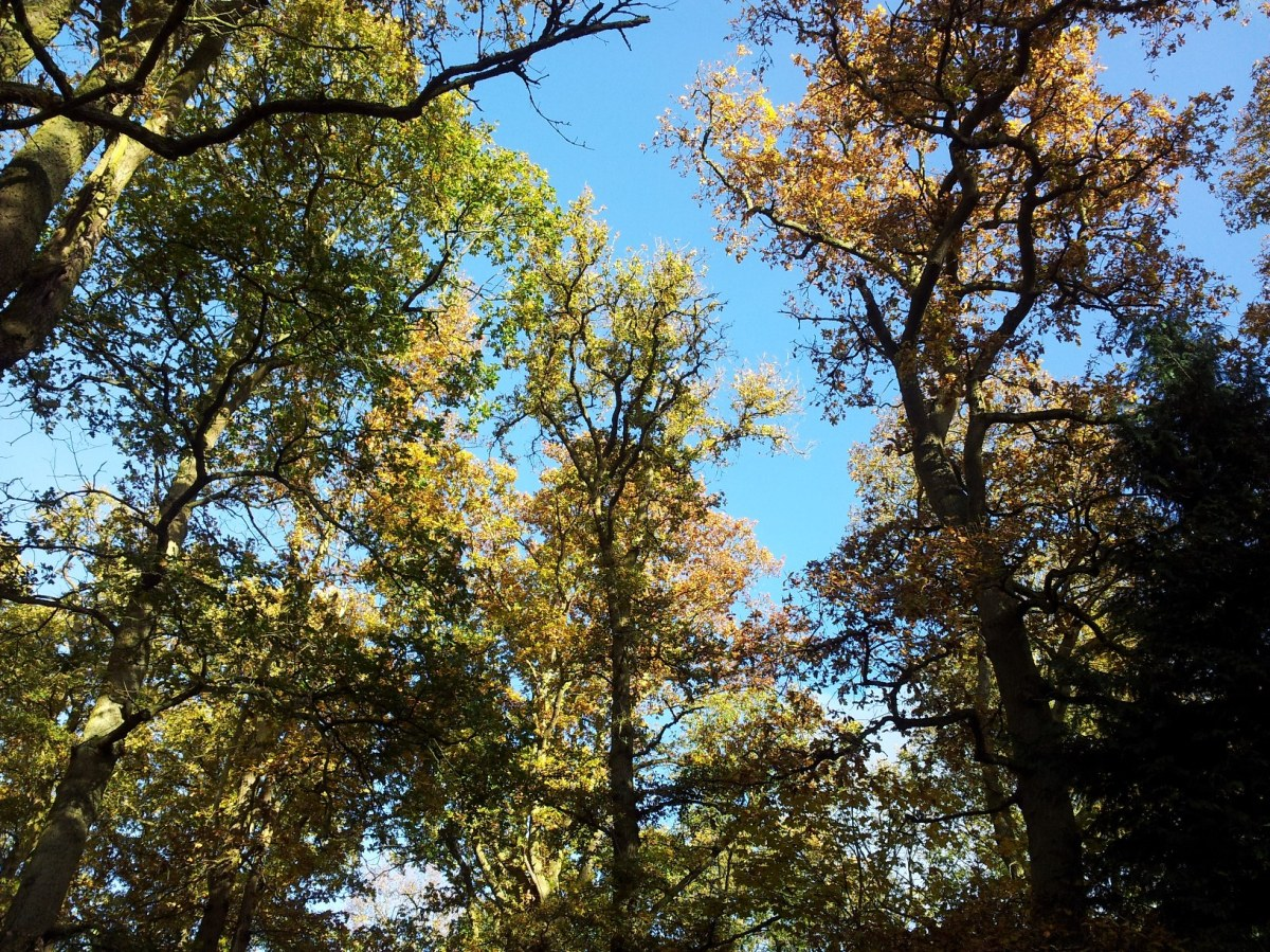 Tree canopy in the autumn